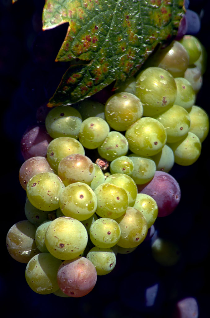 Verasion by Stephen Galvin